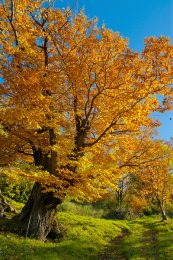 Give pillows and bedding an autumn fresh clean